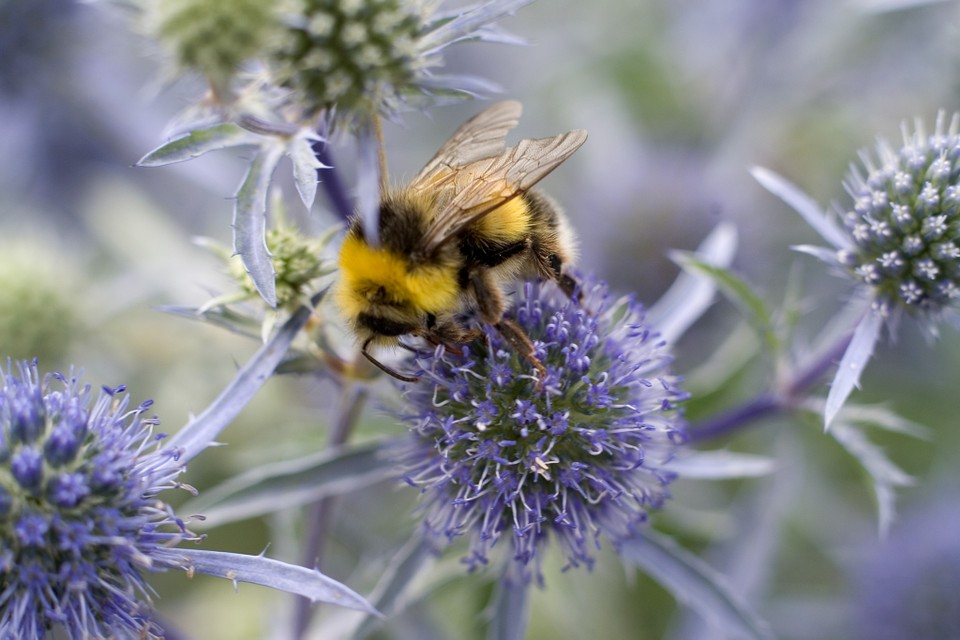 12 Of the Best Plants for Bees In UK