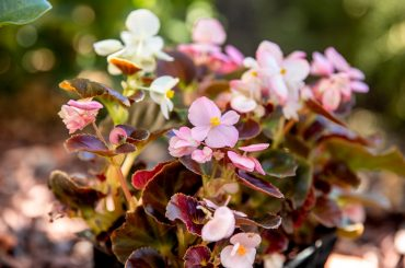 20 Best UK Plants for Pots & Containers