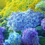 8 Flowering Shrubs