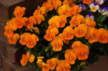 Best Plants with Orange Flowers