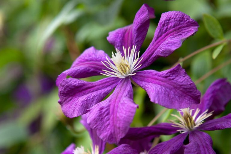 Best Plants with Purple Flowers