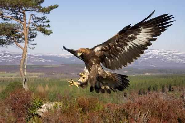 Different British Birds of Prey