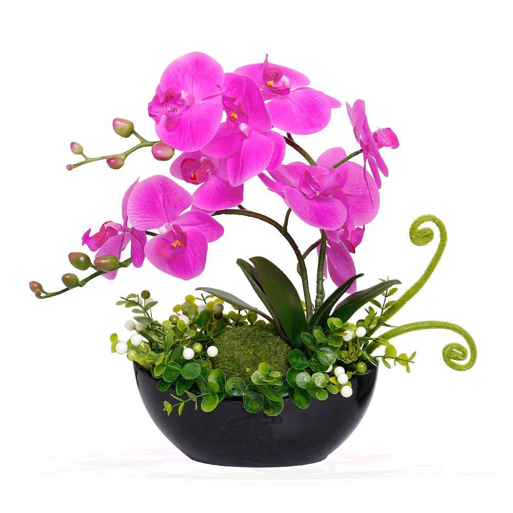Phalaenopsis Flowers Arrangement Orchid Plants Bonsai