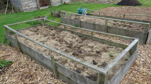 Sowing and Planting Blackcurrant