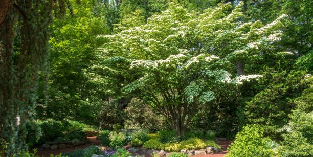 The 10 Best Trees For Small UK Gardens