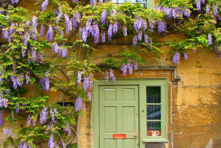The UK's 7 Best Climbing Plants for Shade
