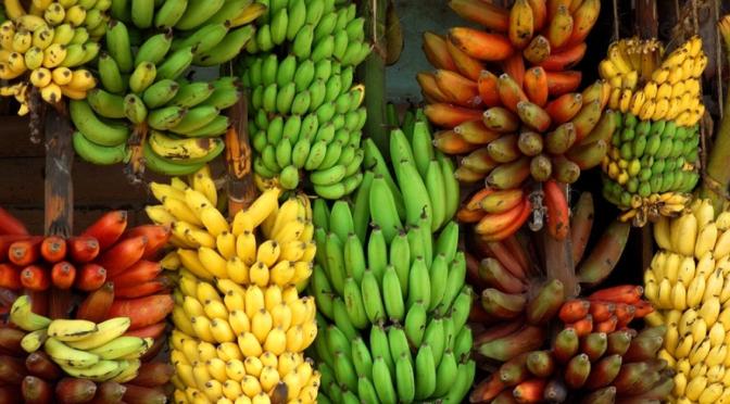 Varieties of Banana Plants
